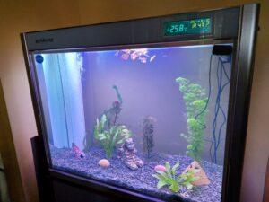 View of whole aquarium